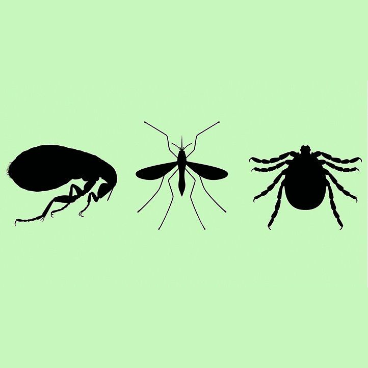 residential mosquito treatment in Brandon